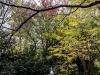 Jap_Nov18_16