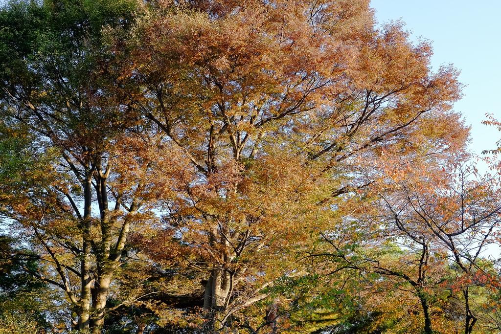 Jap_Nov18_05