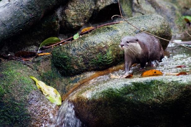 zoo_may2012_03