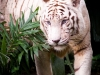 zoo_may2012_04